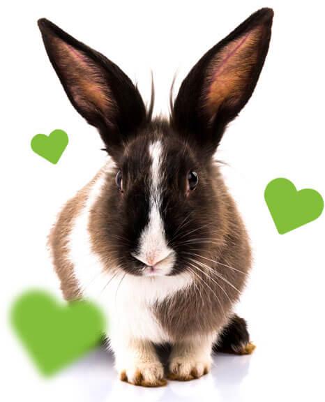 Kaninchen mit fliegenden Herzen