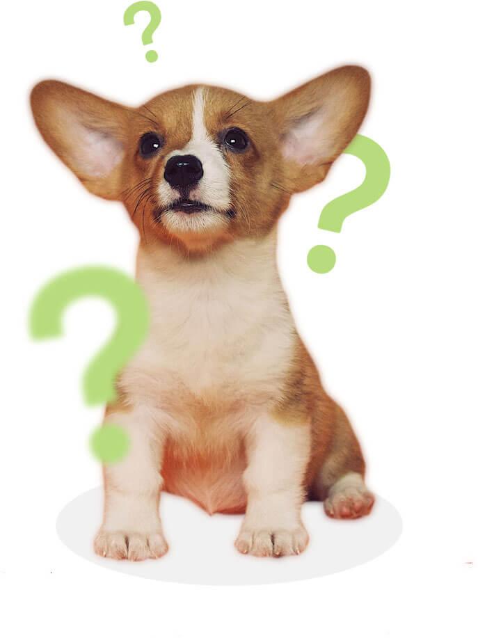 Hund mit fliegenden Fragezeichen
